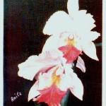 Anita Leva - Fiori rosa
